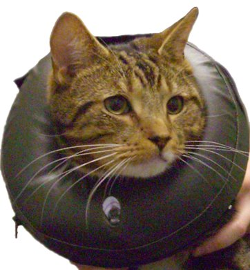 Thrive-COMFY-COLLARS-per-Gatti-e-Cani5023538533333Thrive1.jpg
